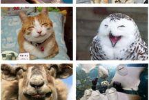 they make me smile