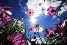 Beautyfull Purple Flowers walpaper HRess