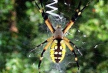 Spiders And Bugs / by Thomas Byers