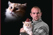 Awkward Photos...with cats / by Alison Windler
