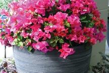 flowers-houseplants
