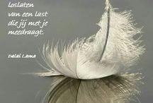 boeddhistische quotes