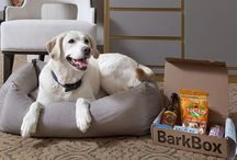 goodDog / The Benjamin's four-legged guests always sleep in style with the goodDog program in partnership with BarkBox.