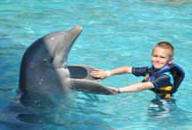 IWTTT - Dolphin Discovery Cancun, Playa Del Carmen, Cozumel, Isla Mujeres / I promote for Sandos Resorts Vacation Club which offers a 5 night all inclusive stay for attending their timeshare promotion!  http://IWantToTravelTo.com