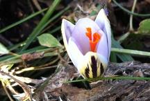Flower bulbs in the wild