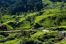 Munnar and Alappy tour / Kerala tour package covering Munnar and Alappy Houseboat just for Rs 10,000  info@travelgowell.com, +91 9946476040  http://travelgowell.in/index.php?option=com_k2&view=item&layout=item&id=356&Itemid=566