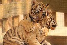 в мире животных / о братьях наших меньших
