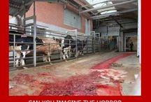 why I am a vegan