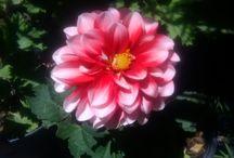 flores de mi abuela