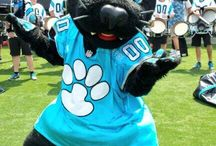 Carolina Panthers / by Teresa Crawford