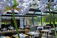 Restaurant / by Brian DeWitt