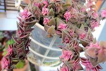 Inside Houseplants / Succulents