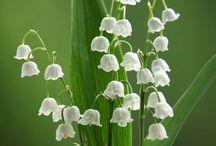 kwiaty -natura