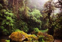 Costa Rica / Pura Vida