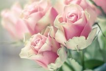Reng-i Ahenk / Çiçekler