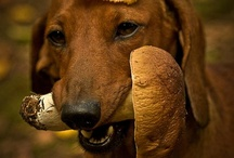 Dogs / by Dalia Aleksandraviciene