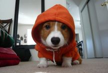 The Cutest Corgis / by Emily Hunnicutt & Peter Kruger