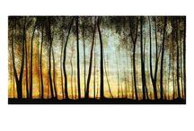 metsä puut