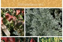 Gardening Tips / by Alissa {Fun Finds for Families}