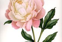 Шебби розы по 1 шт