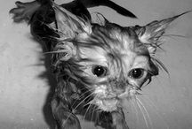 pets / by Amy Knutson