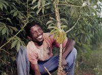 Cassava beer