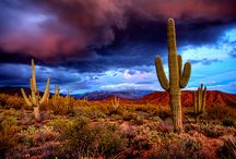 Cool Desert Pictures / by Cyndi Perrelle MacDonald