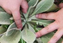 plantes medico