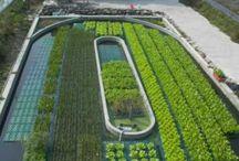 all types of hydroponics system / hydroponics and aquaponics