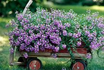 Gardening / by Sandy Lueker