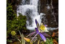 Wildflowers and waterfalls in Telluride