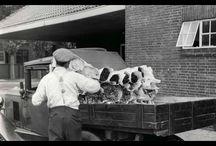 Geschiedenis / Oude foto 's van het bloemenvak.