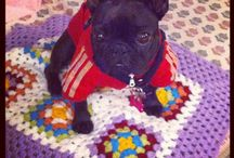 Etsy / Handmade Crochet and Knit Favorite Items for dogs like blankets from etsy!