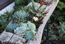 Blomster i træstub