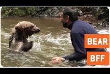 Favourite Animal Footage