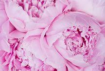Florals / by Tessa Romney