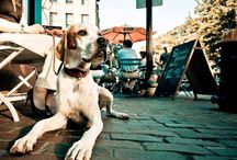 Restaurants et Bars Pet Friendly