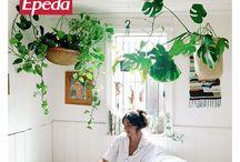 6 piante da mettere in camera da letto per dormire meglio / Sfumature di verde per colorare i tuoi sogni su un prezioso materasso Epeda