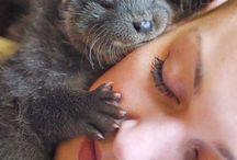 Animal Cuties /  Animals and people too cute. / by keitte Matthews
