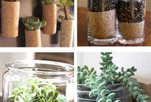 Succulents / Diysucculent