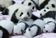 what a pandaful world :)