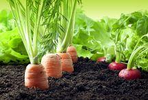 Fresh Veggie Garden / Organic and Natural Gardens