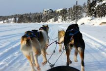 Anchorage / Why we love Anchorage