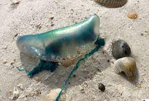 Cape San Blas' Marine Life