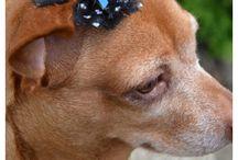 dog bows / doggy bows