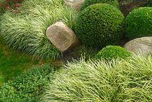 Gardening: Informal gardens