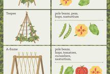 Plantas, huertos, terrazas y otros exteriores