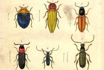 Insects old illustrations