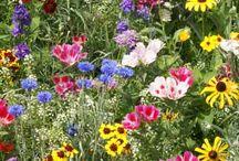 Garden and Farm / by Mary Carol Cowart