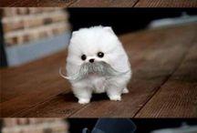 Komik hayvan fotoğrafları